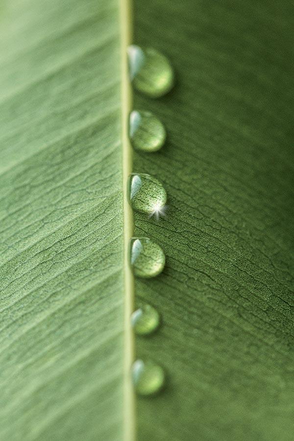 Biorganic Color Diamante